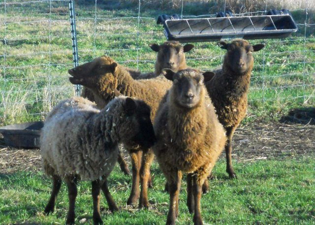The New Shetlands